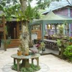 橄欖樹 紫屋外 1