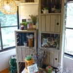 橄欖樹 紫屋 2