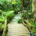 綠景咖啡區 10