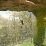蜘蛛 對焦一直對不清相機笨笨也