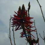 水庫植物 4