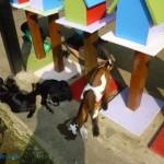乳牛的家 可愛動物區 小羊 1