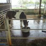 乳牛的家 可愛動物區 馬